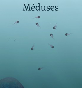 méduses photo